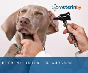 Dierenkliniek in Gurgaon
